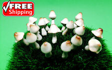 20 Tiny 2 design Mushroom Miniature Dollhouse Fairy Garden Accessories set No2