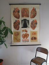 Vintage pull roll down medical school chart poster du cœur humain structure