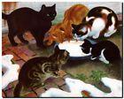 "Vintage Australian Art CANVAS PRINT Cats 24""X18"""