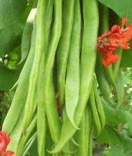 Vegetable - Runner Bean - Firestorm - 25 Seeds