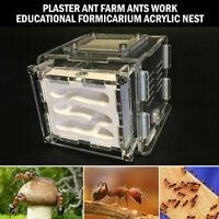 Mini Plaster Ant Farm Ants Work Educational Formicarium LIVE Ants Acrylic Nest