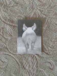 "ACEO ORIGINAL ""PIG TAIL"" RKS Art studios GRAPHITE FARMHOUSE ANIMALS"