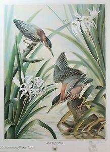 Basil Ede Green Backed Heron Limited Edition Print with Hand Drawn Heron, RARE!