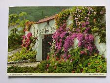 Canary Islands Spain Vintage colour Postcard 1972