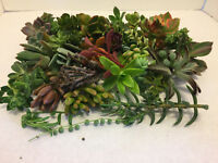 """Beautiful Succulent cuttings - 20 variety """"great for starter project"""""""