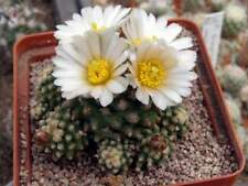 Pediocactus knowltonii,seeds10 pcs