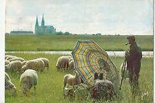 Bf24498 chartres e et l la plaine sheep mouton france front/back image
