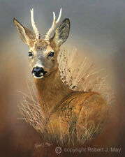 Limited Edition of 50 Roebuck Prints by Robert J. May