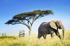 101964 Large African Elephant Against Acacia Tree Decor LAMINATED POSTER FR