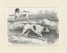 POINTER DOGS AT WORK RARE ANTIQUE 1878 DOG PRINT ENGRAVING READY MOUNTED