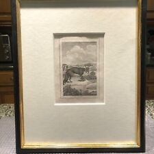 Antique Copper Engraving of a Fox by von Gregory; matted, framed; 1810 London