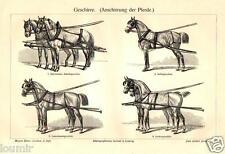 1898=CAVALLI DA TIRO FINIMENTI = Animali = Antica Stampa = Old ENGRAVING
