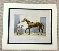 1895 Antique Horse Print Thormanby Racehorse 1860 Royal Derby Cup Winner 19th C