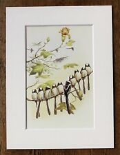 John Gould - 1970s Vintage Mounted Colour Bird Print - Long Tailed Tit (64)