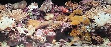 poster fond d aquarium decor double face eau de mer 60 x 30 cm