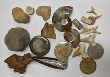FOSSIL COLLECTION - Dinosaur Ammonite Shark Orthoceras Stingray Crynoid (#U316)