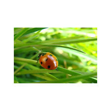 50 X 40 LADYBIRD PICTURE MODERN RED GREEN WALL ART ABSTRACT LARGE PRINT