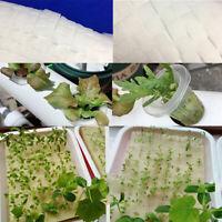 100p Cultivation Seedlings Vegetables Plant Nursery Sponges Soilless Hydropo YK