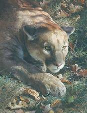 Carl Brenders STALKING, Cougar, art print ARTIST PROOF AP#61/76