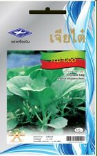 Chinese Kale Seeds Vegetable  For planting Seed 2,190 Seeds 10 G. Chia Tai