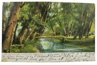 Harrisburg Pa The Woods in Paxtang Park 1909 udb Postcard N13