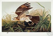 Ltd. Ed. M. Bernard Loates Audubon RED-SHOULDERED HAWK Print Signed