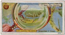 Symbiotic Ant and Aphid Relationship 7X 1920s Trade Ad Card