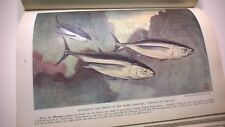 The Book Of Fishes 1939 National Geographic Antique Nature Ichthyology
