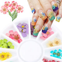 12Color Real Dry Dried Flower For 3D UV Gel Acrylic Nail Art Tips Decor Manicure
