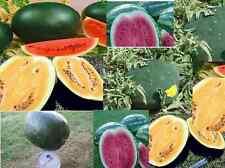 WATERMELON  HEIRLOOM colour Mix 15 seeds vegetable garden non-GMO