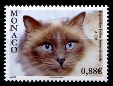 Ragdoll-gato. internamente. gatos exposición, Monte Carlo .1w. mónaco 2009