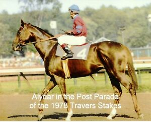 """1978 - ALYDAR in the Travers Stakes Post Parade at Saratoga - Color - 10"""" x 8"""""""