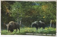 Buffalos Riverview Park Omaha Nebraska Hand Colored 1920 Postcard A8