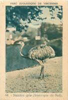 Nandou d'Amérique Greater rhea Parc Zoologique de Vincennes Zoo IMAGE OLD CARD