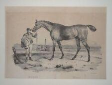 Moser Herzog York - Adrien - Lithographie - Rennpferd Zoologie Tier Ross - 1830