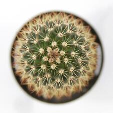 "25 Seeds ""Red- Headed Irishman"" Succulent Cactus Plant Garden Cacti"
