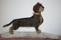 """Wire Haired Dachshund """"Mistral"""" - One of a kind, needle felted, dog, sculpture"""