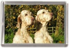 English Setter Fridge Magnet Design No 8 by Starprint