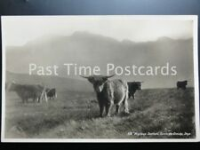 Isle of Skye HIGHLAND CATTLE Highland Sentinels Corrie-Na-Creiche Old RP PC