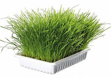 3 X Trixie Bag of Cat Grass Seeds - Approx. 100 G/bag Grow Your Own 4233 No Tray