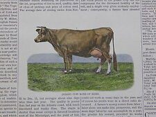 The Cultivator & Country Gentleman, in-text illustration #34 Jersey Cow