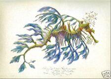 Seahorse LEAFY SEA DRAGON original MEDIUM SIZE art print handworked & SIGNED