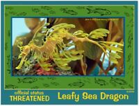 The Leafy Sea Dragon, an inspirational, educational, Endangered Animal card