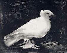 La petite colombe (Dove, 1949) by Pablo Picasso Art Print Wildlife Poster 11x14