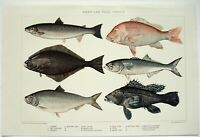 American Food Fish - Original 1902 Dated Stone Chromo-Lithograph by Julius Bien