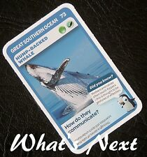 Woolworths   AUSSIE ANIMALS   Card 73/108 GREAT SOUTHERN OCEAN Hump-Backed Whale