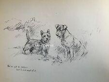 K.F.Barker 1937 Cairn Terrier And Fox Terrier Rabbit Hunt Charming Vintage Art