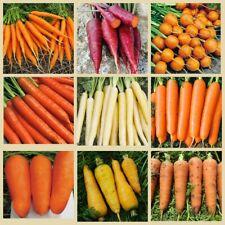 200Pcs Carrot Vegetable Seeds Daucus sativus 10 Kinds Delicious Sweet Organic