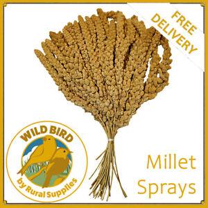 Millet Sprays | Premium Quality |  Aviary | Bird Food | Hanging Treat | Budgies