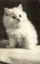 Cute Fluffy Long-Haired White Kitten - Cat Real Photo Postcard